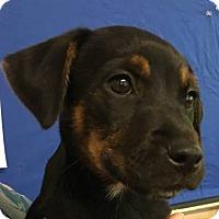 Adopt A Pet :: Pepper - Big Canoe, GA