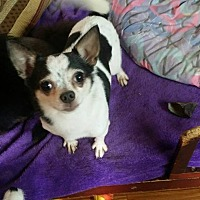 Adopt A Pet :: Tyler - Crump, TN