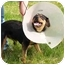 Photo 2 - Rottweiler Dog for adoption in Marion, Arkansas - BAGEL: Please Read