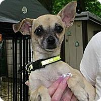 Adopt A Pet :: Chloe - South Amboy, NJ