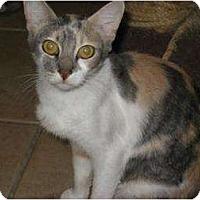 Adopt A Pet :: Mara - Phoenix, AZ