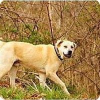 Adopt A Pet :: Wally - Staunton, VA
