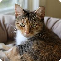 Adopt A Pet :: Tulip - Frankfort, IL