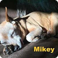 Adopt A Pet :: Mikey - Adopted Dec 2015 - Huntsville, ON