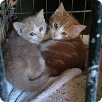 Adopt A Pet :: Emory - Delmont, PA