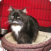 Adopt A Pet :: Zoe - Milford, MA