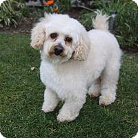 Adopt A Pet :: PENN - Newport Beach, CA
