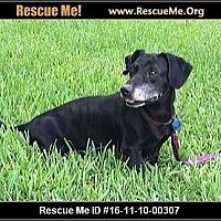 Adopt A Pet :: Bongo - hollywood, FL