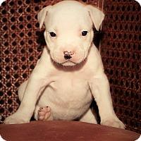 Adopt A Pet :: Madeline - Windermere, FL