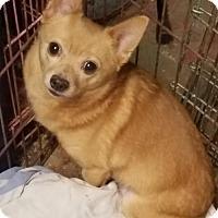 Adopt A Pet :: Darth(hotdog) - Kenosha, WI