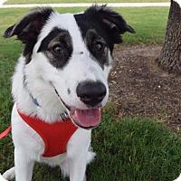 Adopt A Pet :: Einstein - Aubrey, TX