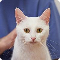 Adopt A Pet :: Kasper - Huntsville, AL