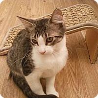 Adopt A Pet :: Tuffy - Bunnell, FL