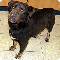 Adopt A Pet :: Raven - Ludington, MI