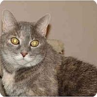 Adopt A Pet :: Aimee - Colmar, PA