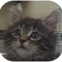 Adopt A Pet :: Crawl The Warrior King - Hamilton, ON