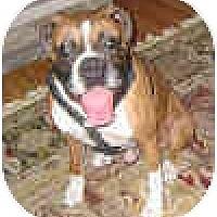 Adopt A Pet :: ROCK - Sunderland, MA