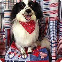 Adopt A Pet :: Max - Acushnet, MA