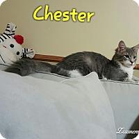 Adopt A Pet :: Chester - McDonough, GA