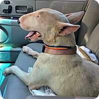 Adopt A Pet :: Sierra - Houston, TX