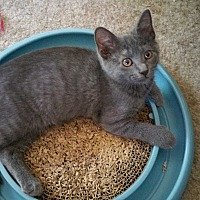 Adopt A Pet :: Rosey - Philadelphia, PA