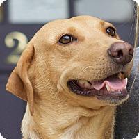 Adopt A Pet :: Maize - Knoxville, TN