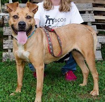 Boxer Mix Dog for adoption in Midlothian, Virginia - Minnow