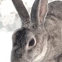 Adopt A Pet :: Seymour - Auburn, CA