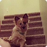 Adopt A Pet :: Jax - Las Vegas, NV