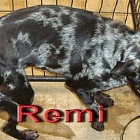 Adopt A Pet :: Remi - Coleman, TX