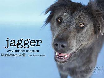 Labrador Retriever Mix Dog for adoption in Castaic, California - Jagger