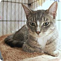 Adopt A Pet :: Mr. Kidd - New Richmond,, WI