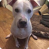 Adopt A Pet :: SALLY - New York, NY
