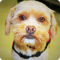 Adopt A Pet :: Sid - Redondo Beach, CA