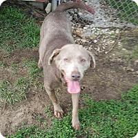 Adopt A Pet :: Bonnie - Indianola, IA