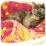 Photo 1 - Domestic Shorthair Cat for adoption in Etobicoke, Ontario - Stella