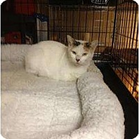Adopt A Pet :: Alicia - Mobile, AL