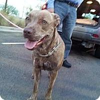 Adopt A Pet :: June - Scottsdale, AZ
