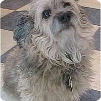Adopt A Pet :: Ruffles - Forest Hills, NY