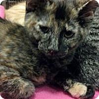Adopt A Pet :: Lexus - Pittstown, NJ