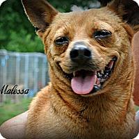 Adopt A Pet :: Malessa - Vancleave, MS