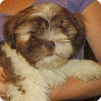 Adopt A Pet :: George - Salem, NH