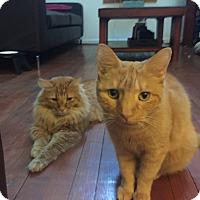 Adopt A Pet :: Rusty & Bo- - Arlington, VA