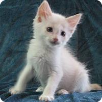 Adopt A Pet :: Indie - Davis, CA