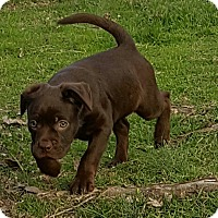 Adopt A Pet :: HEATHER-ADOPTION PENDING - East Windsor, CT