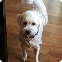 Adopt A Pet :: Dollie Mae - Atlanta, GA