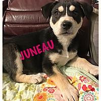 Adopt A Pet :: Juneau - Tempe, AZ