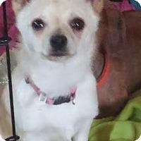 Adopt A Pet :: Kiwi - Acworth, GA
