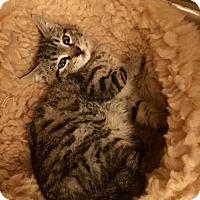 Adopt A Pet :: Tanner - San Jose, CA