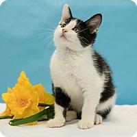 Adopt A Pet :: Quark - Houston, TX